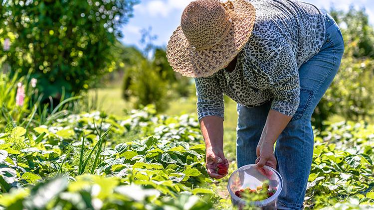 Conheça a importância da agricultura familiar para o país